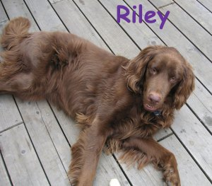 riley-reclining