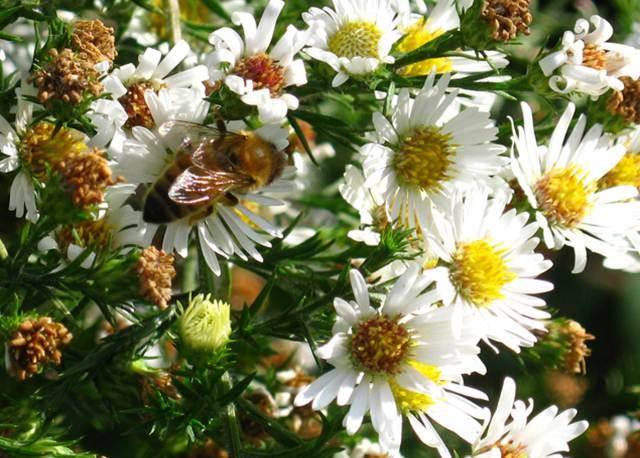 Bee-close-up