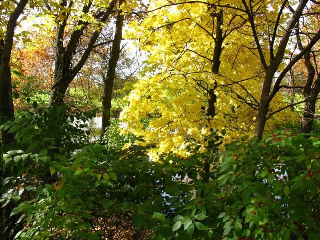 River-through-trees